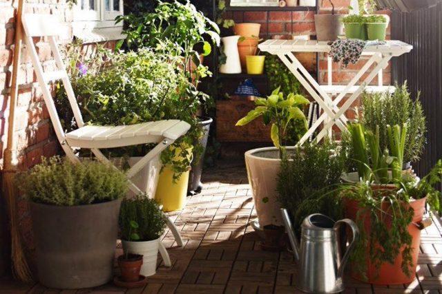 Orto di settembre cosa seminare il blog di celano greenhouse for Cosa piantare nell orto adesso