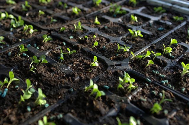 Orto di settembre cosa seminare il blog di celano greenhouse for Cosa si semina a settembre