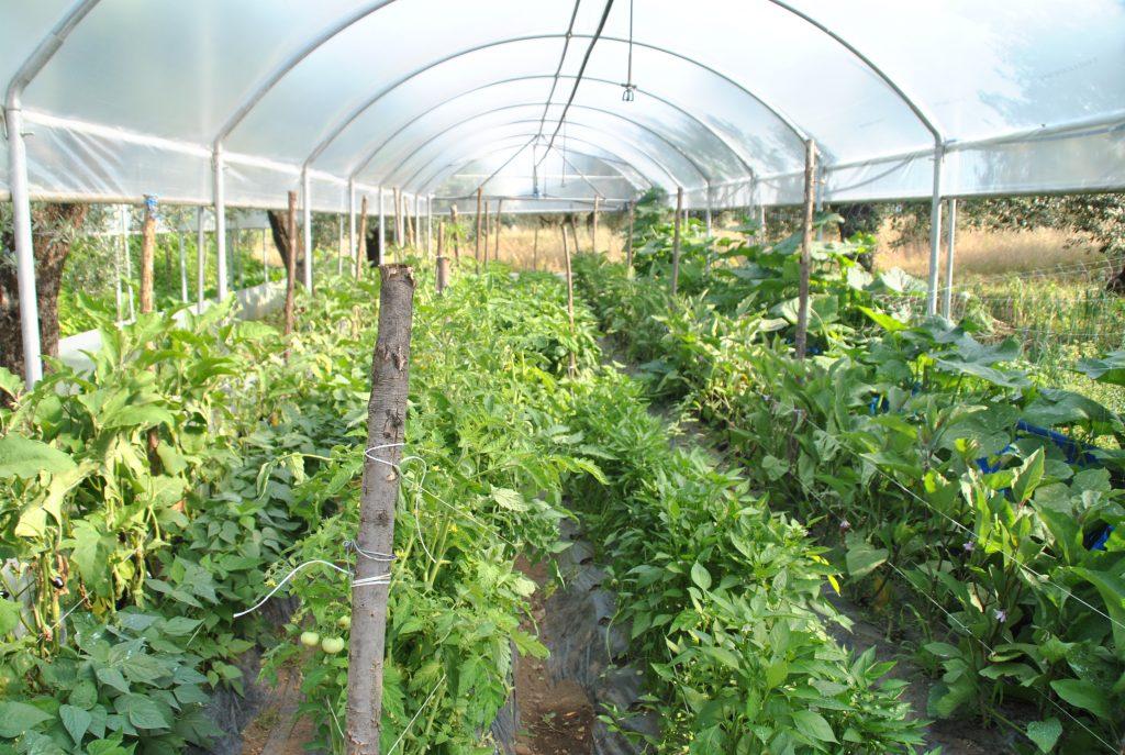 Come coltivare in una serra da orto il blog di celano - Mini serra da interno ...