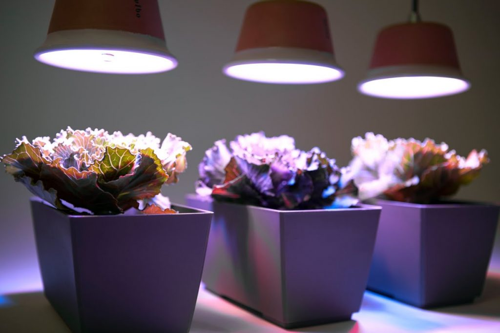 Lampade da coltivazione indoor mini guida il di celano