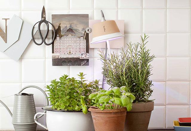 lampade da coltivazione indoor mini guida il blog di