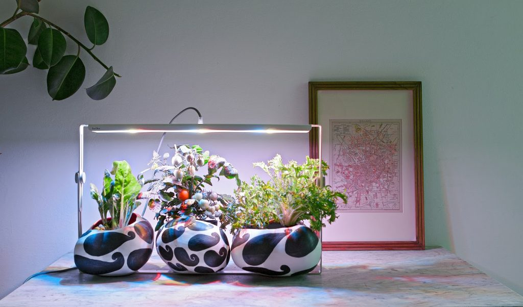 Lampade da coltivazione indoor: mini guida il blog di celano