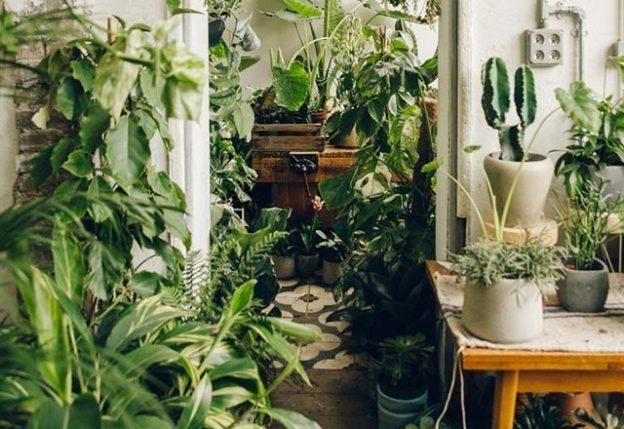 Le piante da appartamento della nonna quali sono e come for Piante da interno alte