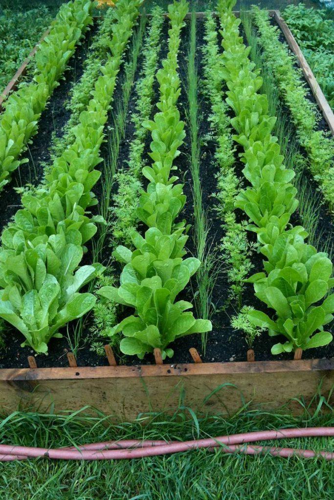 Cosa piantare nell orto ad aprile i consigli per un orto for Cosa piantare nell orto adesso