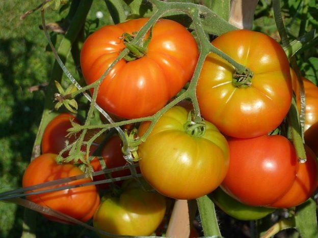 Orto di maggio: i consigli per l'orto a maggio