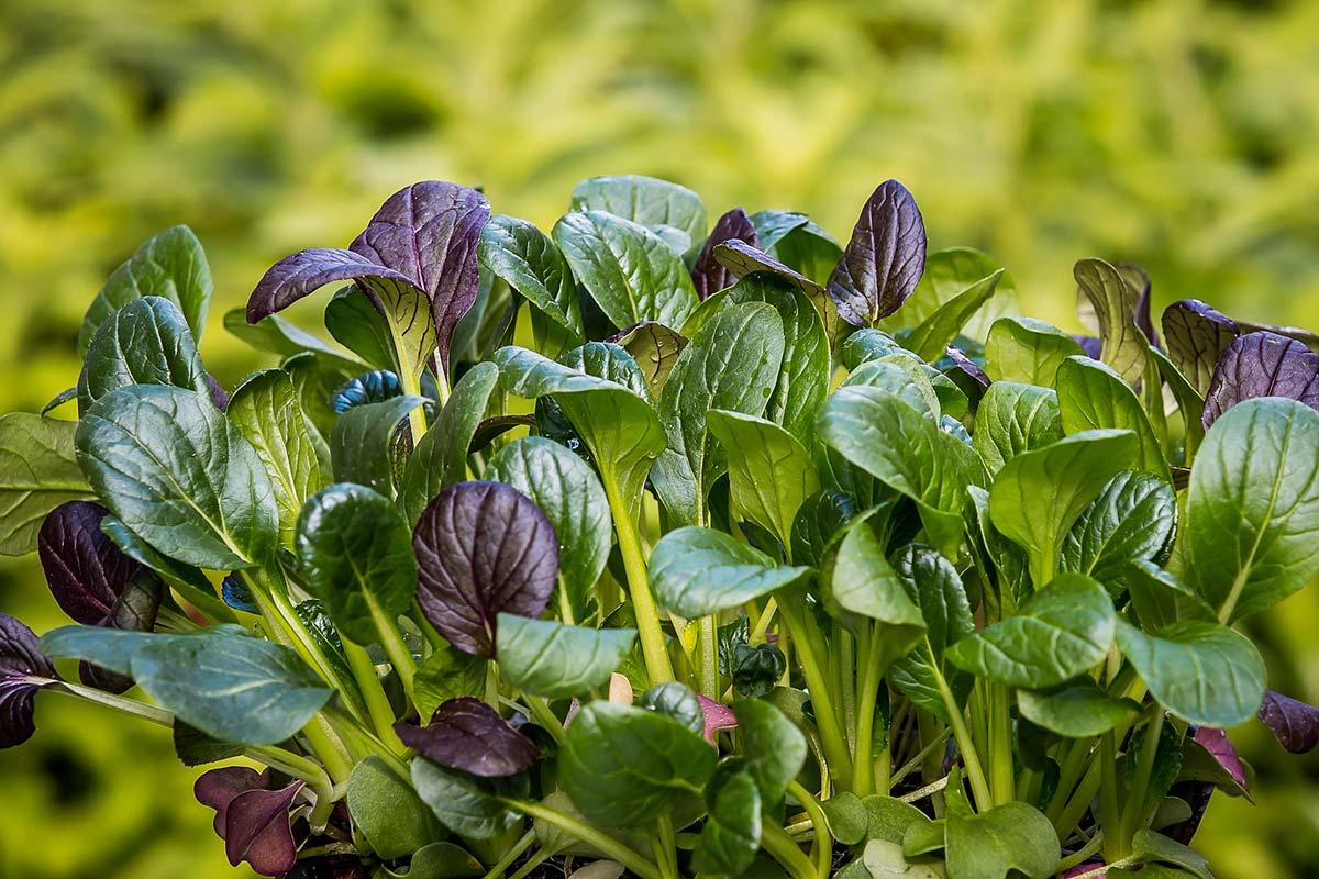 Cosa piantare a ottobre una guida completa sull 39 orto di for Cosa piantare nell orto adesso