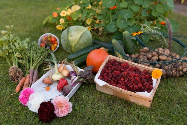cosa piantare a novembre? curiamo l'orto autunnale