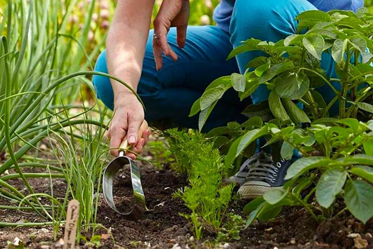 zappa da giardinaggio
