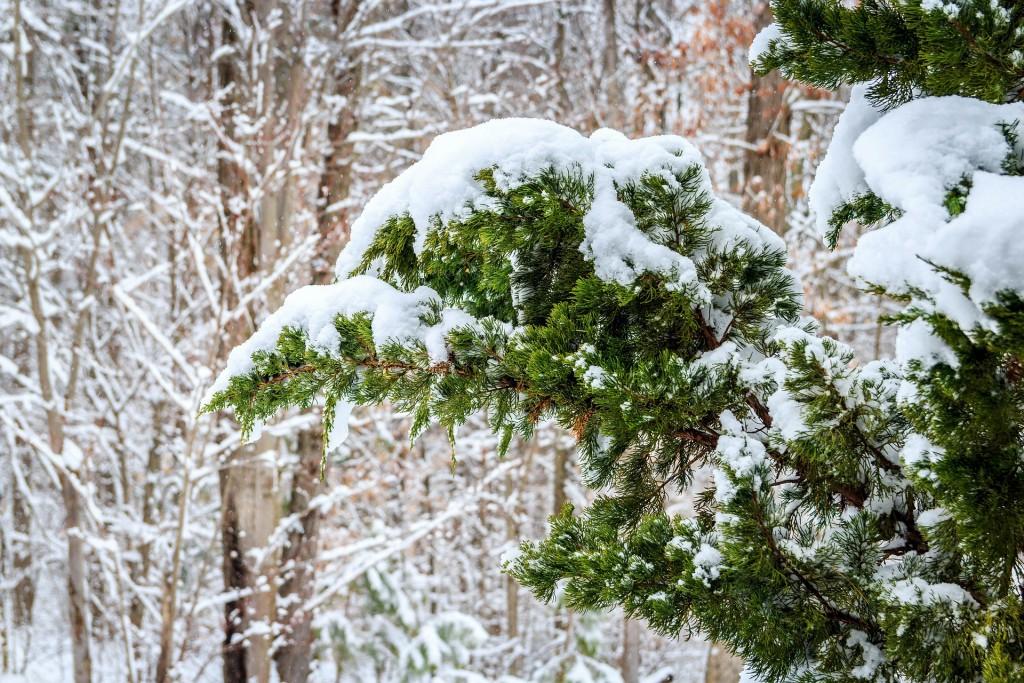 alberi di Natale originali Ginepro