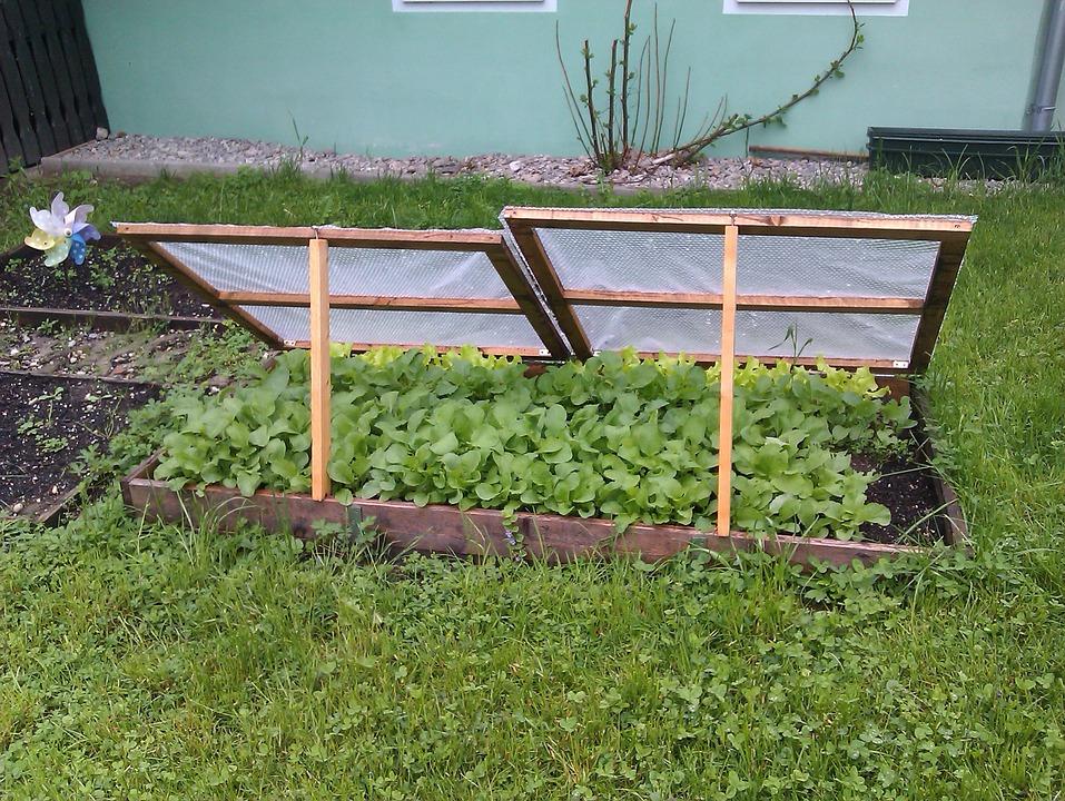 Come preparare l'orto per il freddo