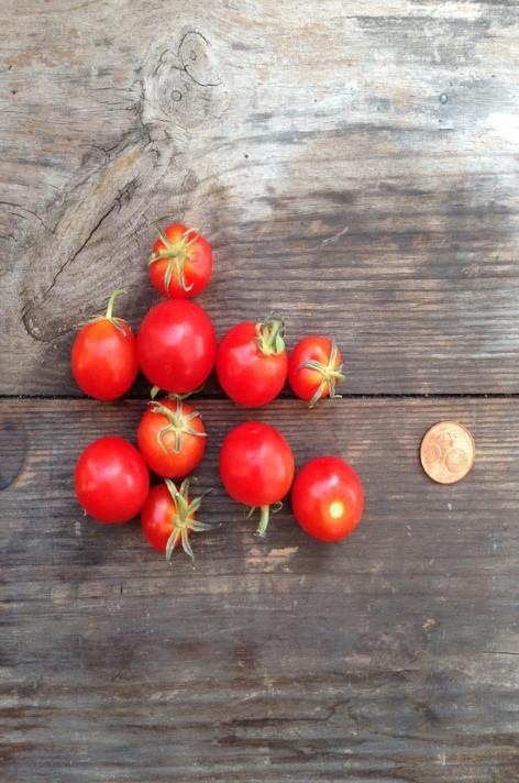 Orto pomodoro
