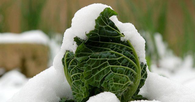 coltivare orto invernale
