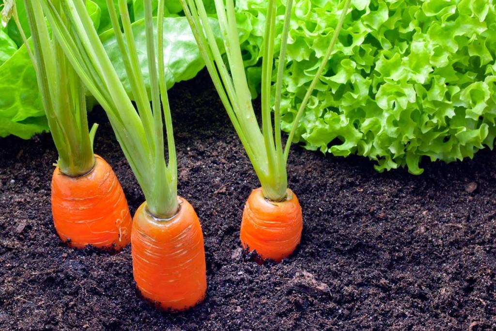 Quali sono gli ortaggi che possiamo seminare nel nostro orto ad aprile?