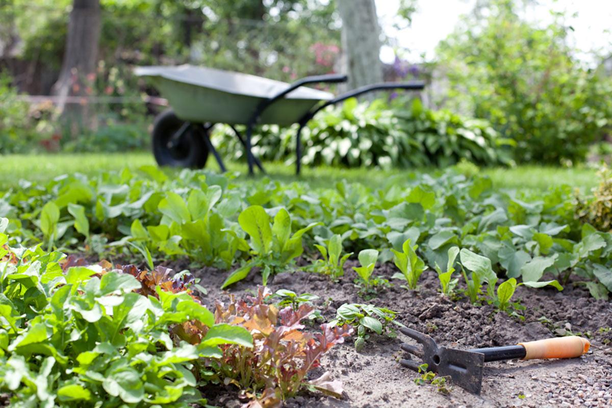 In questo interessante articolo su l'orto ad aprile, quali ortaggi seminare ad aprile