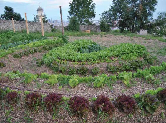 L'orto sinergico è un tipo di orto che non prevede la movimentazione della terra