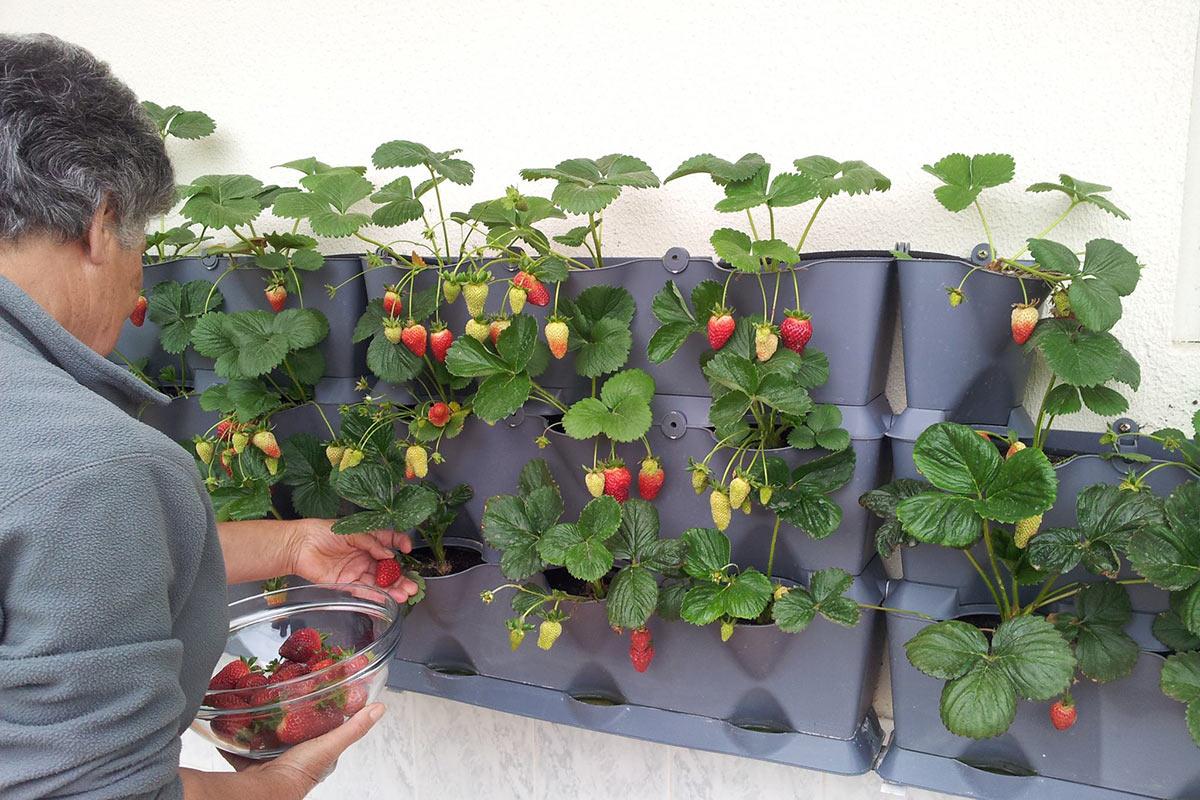 Orto Verticale Fai Da Te Il Blog Di Celano Greenhouse