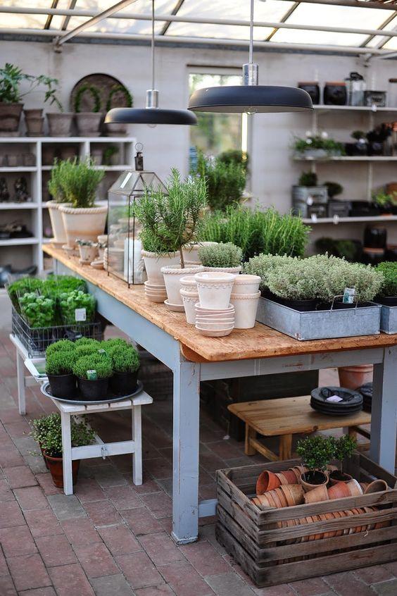 Orto ad aprile cosa coltivare. Garden shop