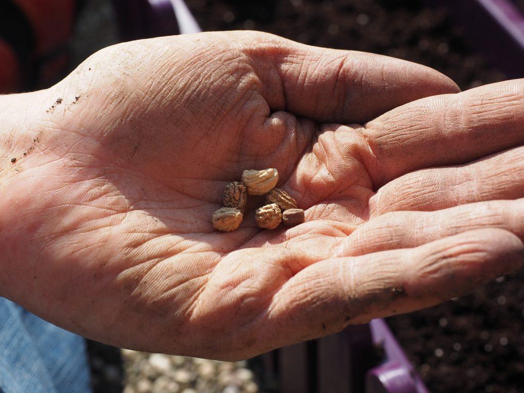 seeds-1117850_1920
