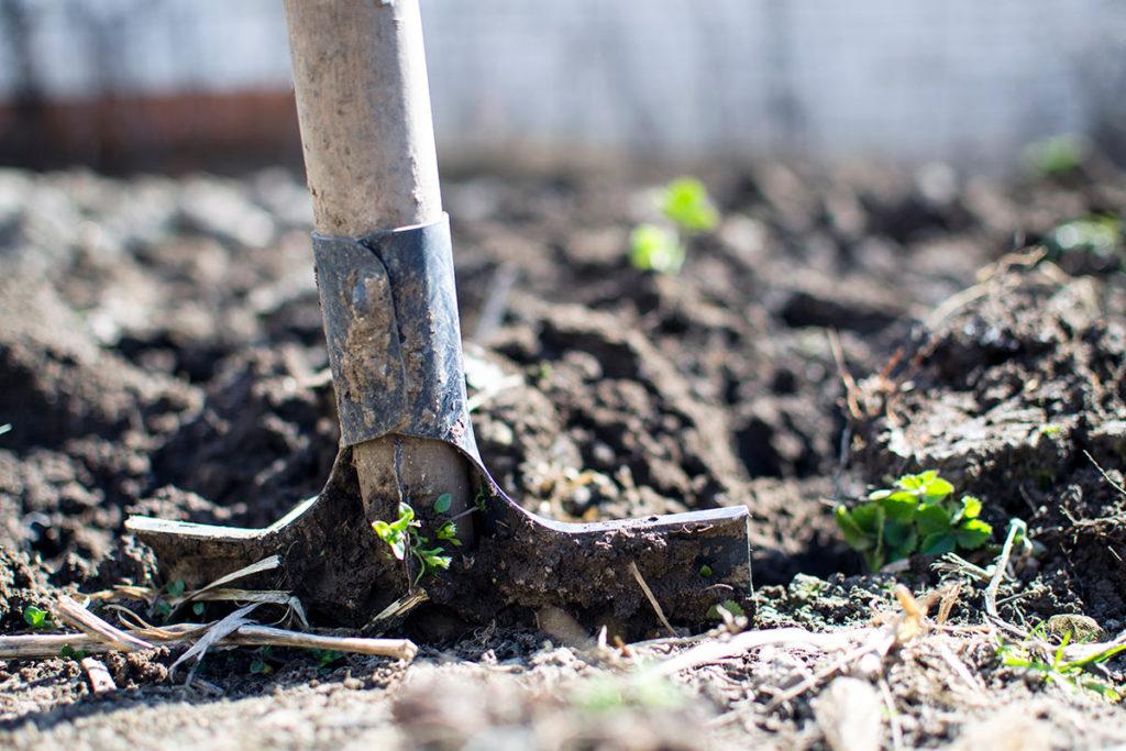 Lavori orto a marzo