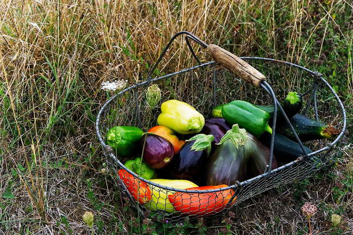 raccolto orto a settembre