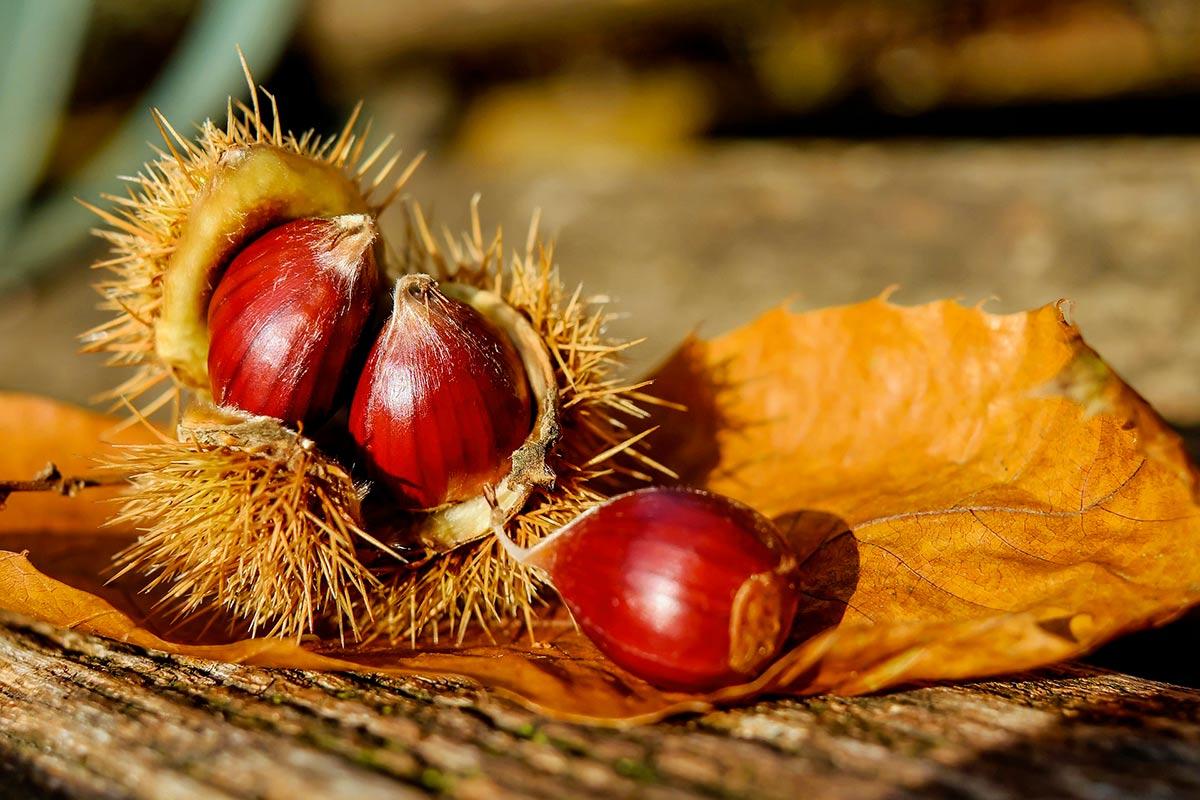 frutti novembre