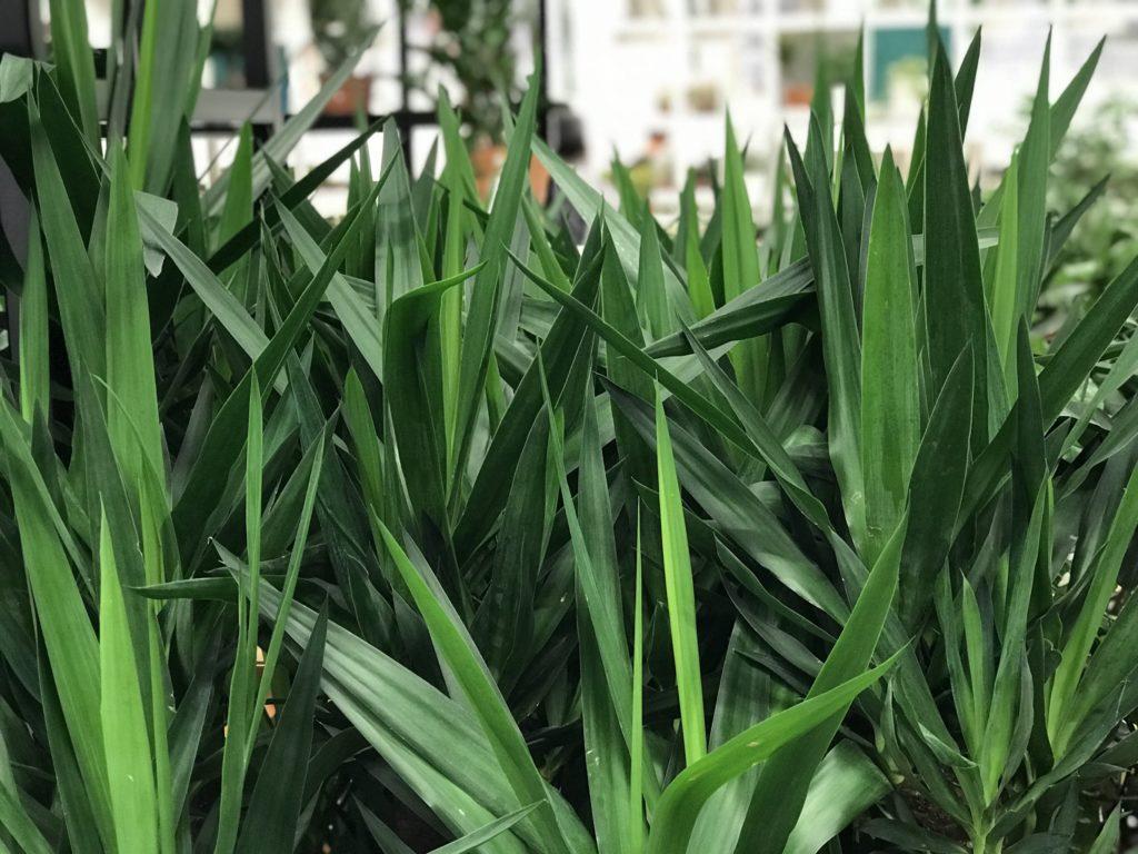 Tipologie di piante per creare l'effetto giungla in casa