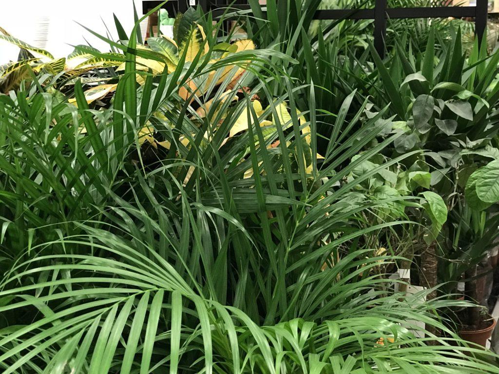 Giungla in casa, scegliamo le piante giuste