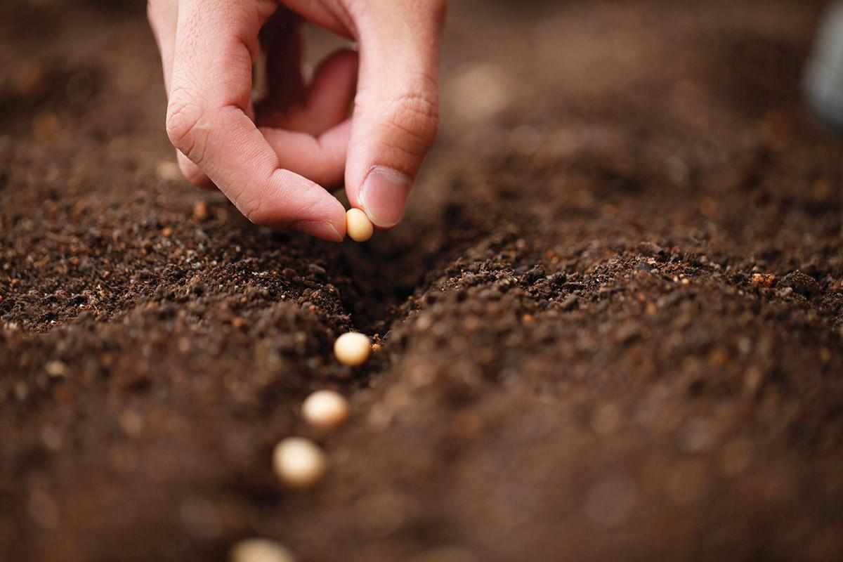 Il calendario delle semine