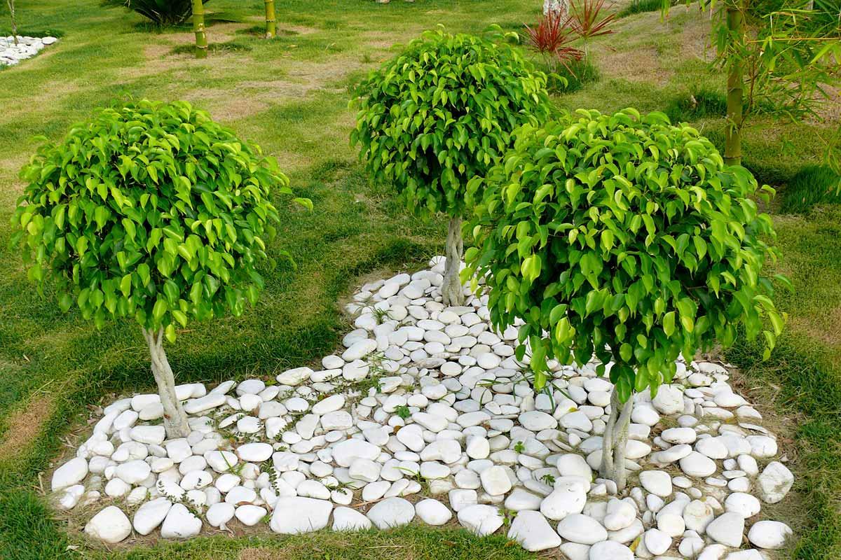 Piante Da Appartamento Ambiente Buio piante da appartamento resistenti: scopriamone alcune