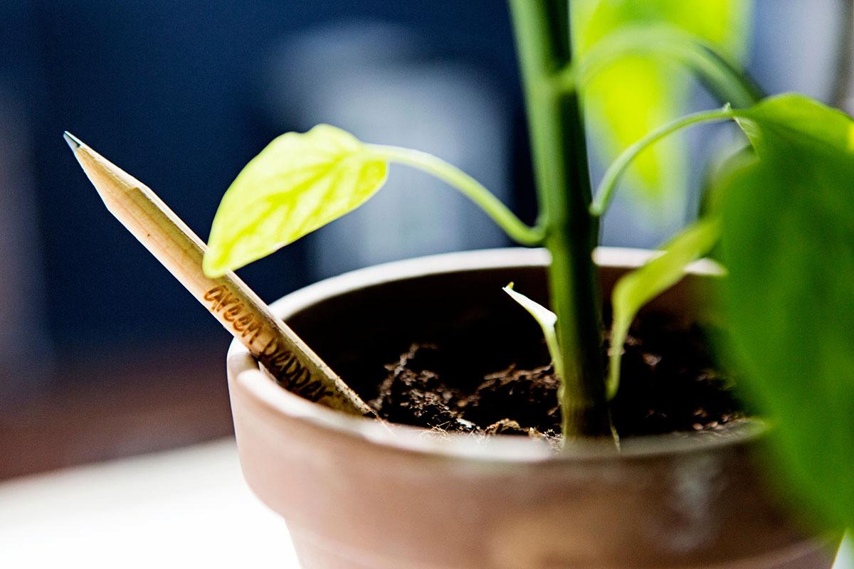 pianta matita sprout