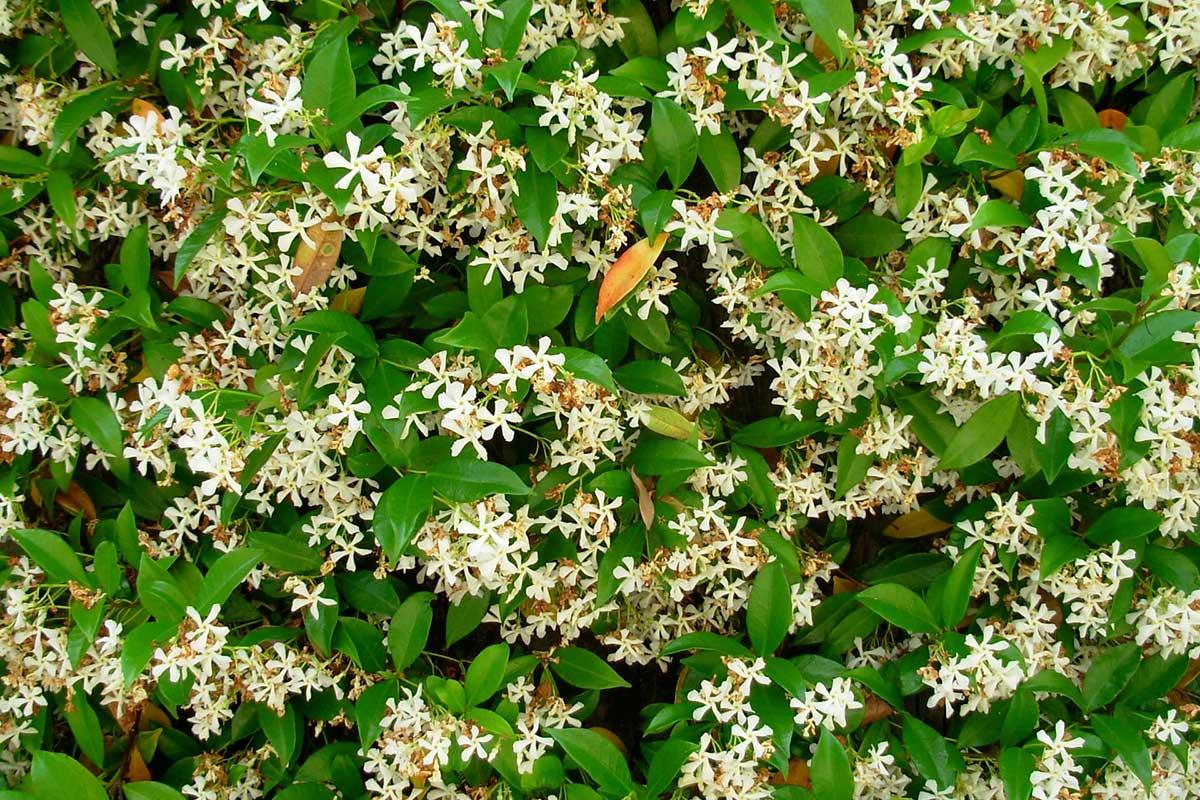 Piante Rampicanti Da Esterno piante rampicanti: tutto ciò che c'è da sapere sui rampicanti