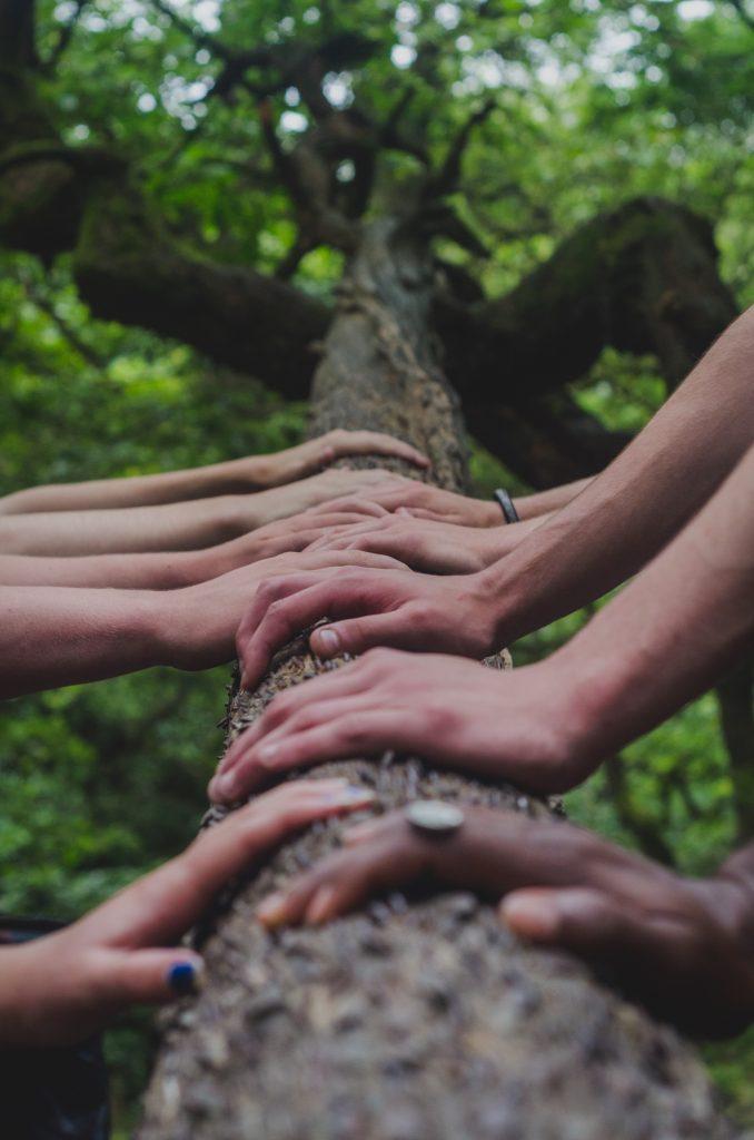 Sul blog di Celano Group un articolo che parla di greenwashing. Nella foto di Shane Rounce, mani si incontrano e sostengono un tronco d'albero.